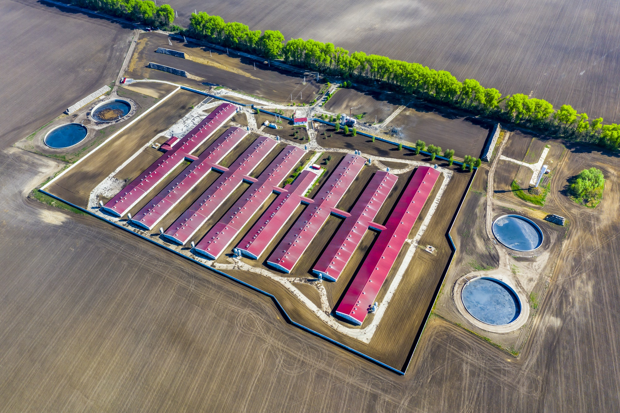 Aerial view of a large pig farm on an agricultural field in spring